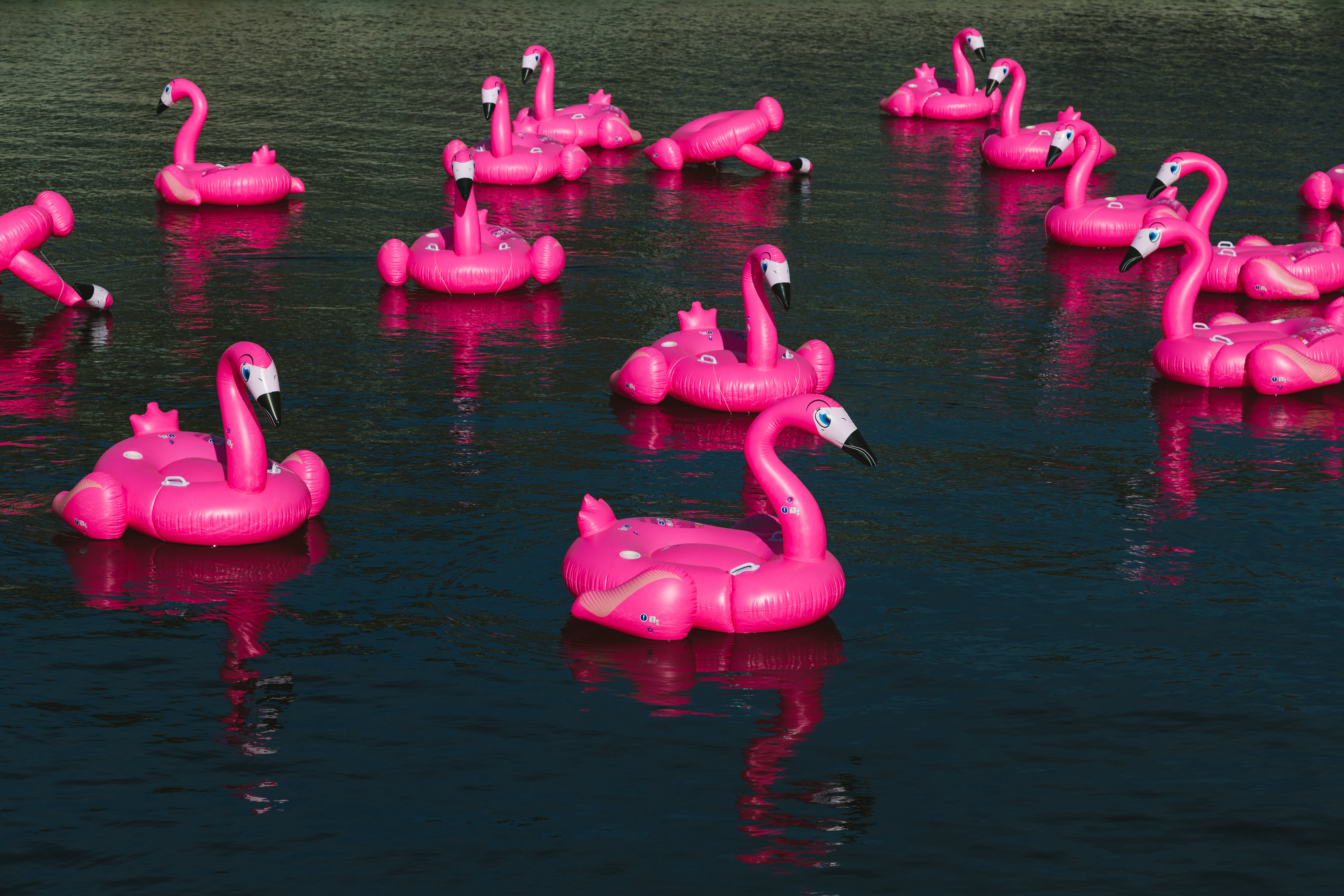 Free stock photo of body of water, flamingo, group, inflatable