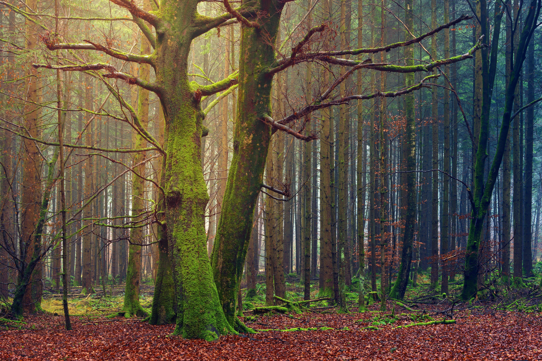 パーク, 昼間, 木, 木の幹の無料の写真素材