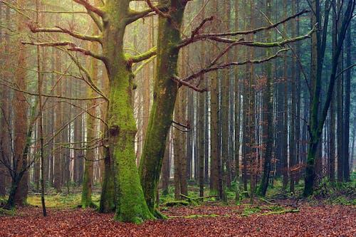 Gratis stockfoto met boomschors, boomtakken, Bos, bossen