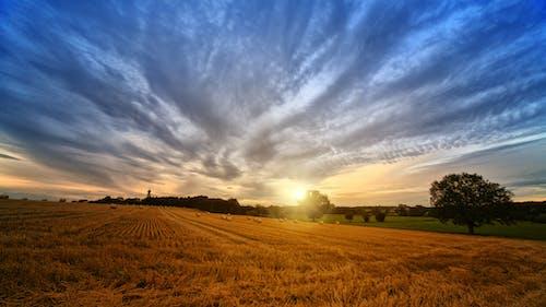 Photos gratuites de agriculture, arbres, campagne, champ de blé