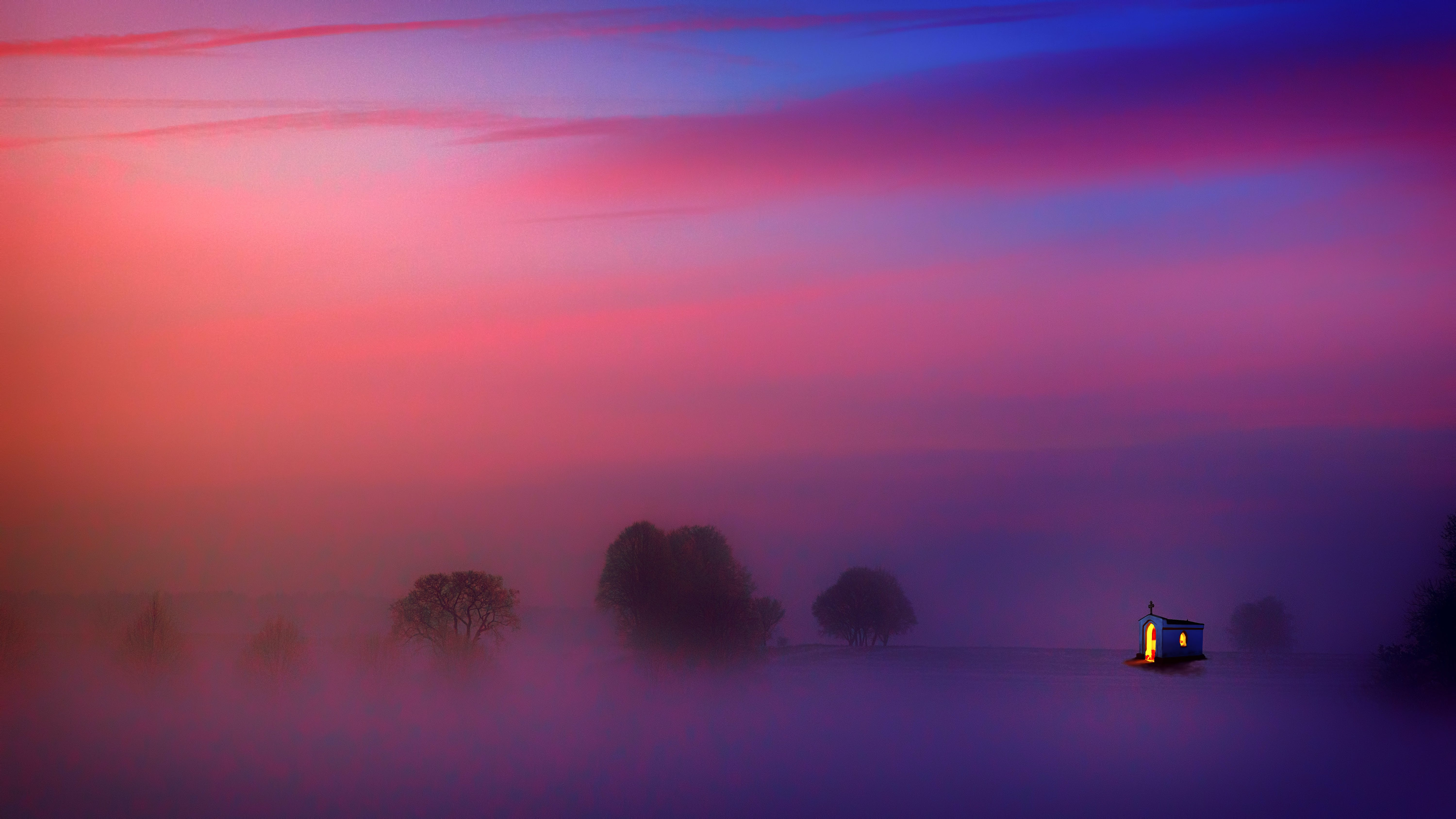 Photography of Trees Covered with Fog
