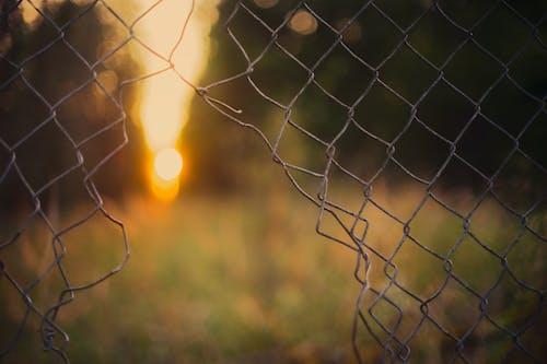 Fotos de stock gratuitas de cerca, colores, fondo borroso, puesta de sol
