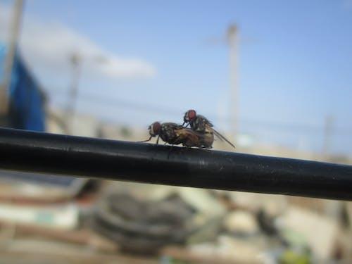 Imagine de stoc gratuită din dragoste, fotografie de mare viteză, insecte