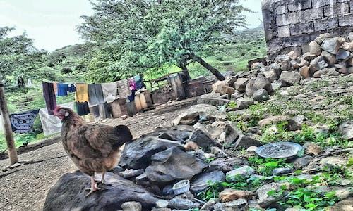 Imagine de stoc gratuită din animal, mama natură