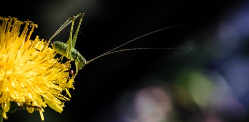 Darmowe zdjęcie z galerii z owad