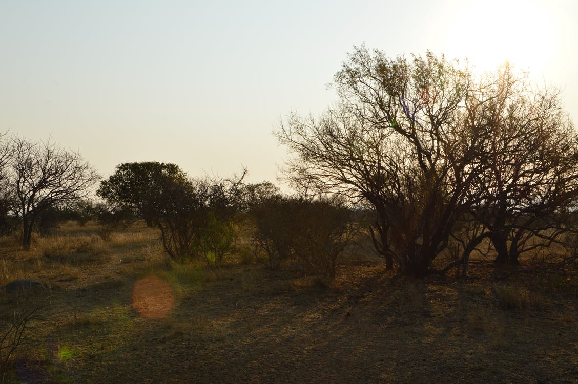 Free stock photo of bush, bushveld, evening sun