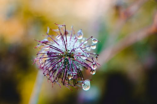 Imagine de stoc gratuită din anotimp, creștere, culoare, floare