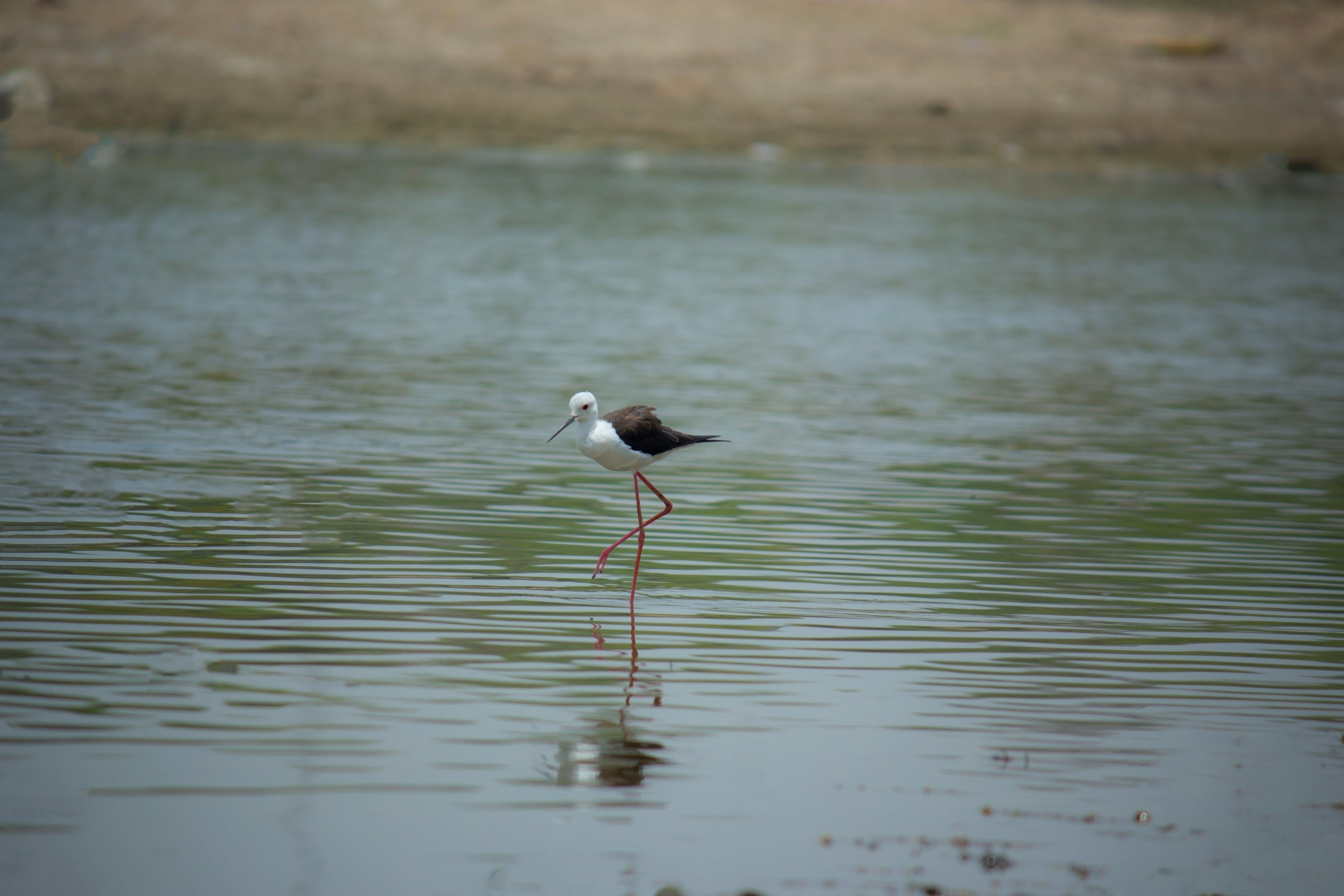 Foto d'estoc gratuïta de #natura #bird #birdsofinstagram #animals #wildlife, #waterfowl #devon #birds #birdstagram #bird #ukbir