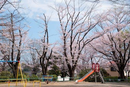 Безкоштовне стокове фото на тему «безтурботний, гілки дерев, гойдатися, делікатний»