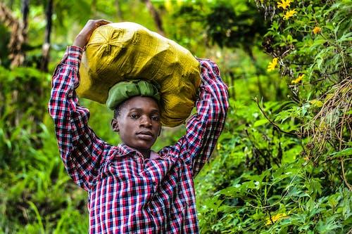 Základová fotografie zdarma na téma černoch, chlapec, denní světlo, les