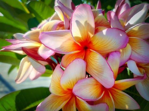 Imagine de stoc gratuită din alb, arbore, floare, floră