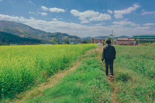 Foto stok gratis berjalan, bidang, cerah, gelanggang
