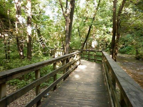 Free stock photo of boardwalk, green, nature