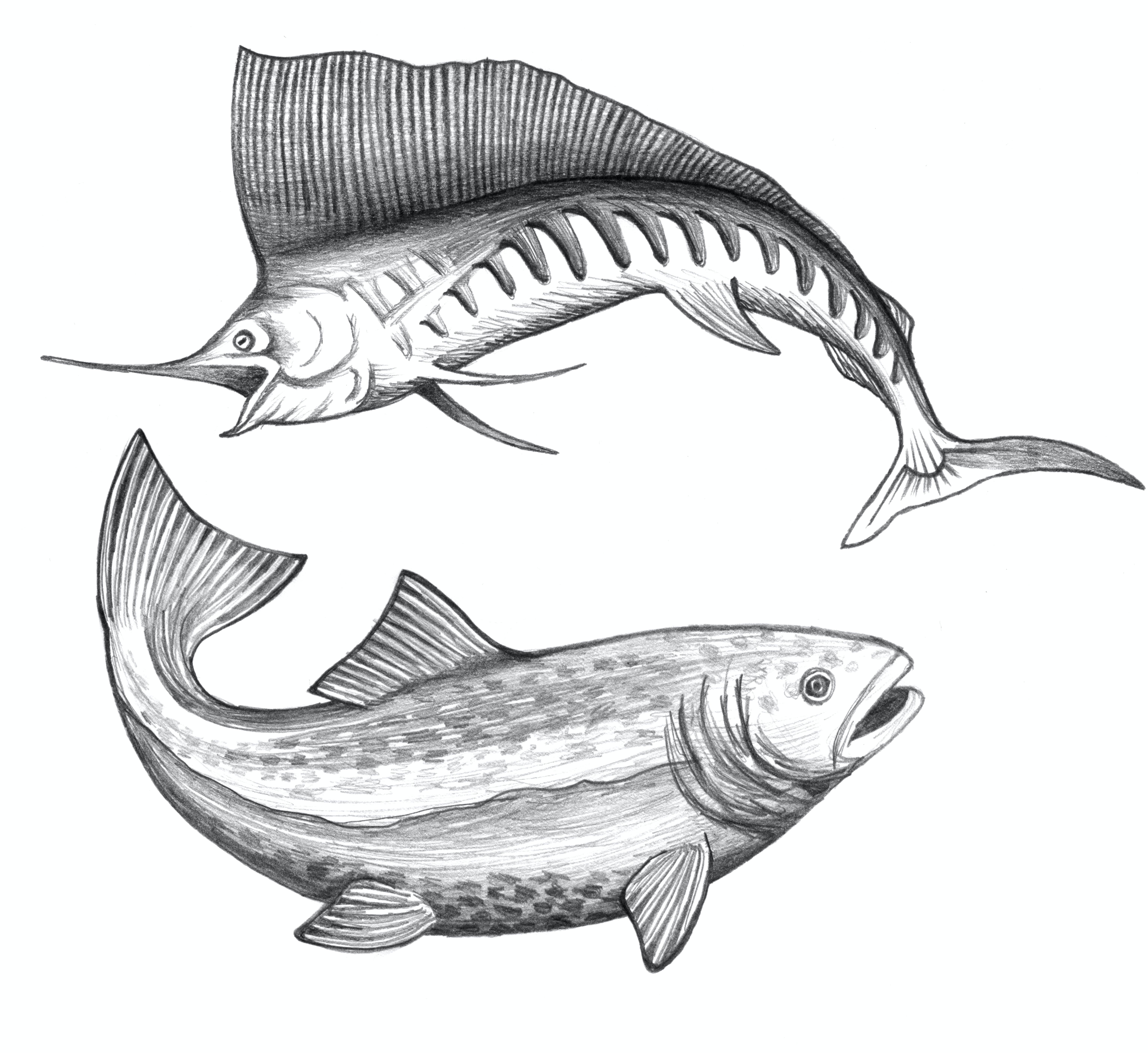 bass, fisch, fisch skizze