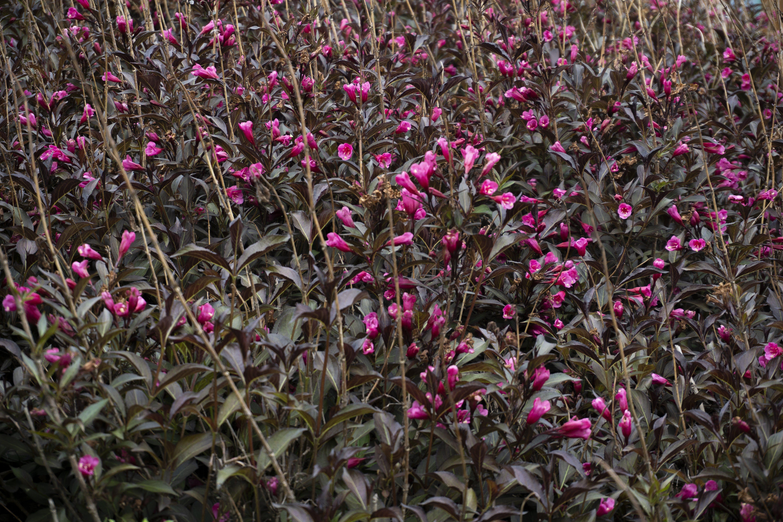 Free stock photo of beautiful flowers, field of flowers, flower buds, flowers