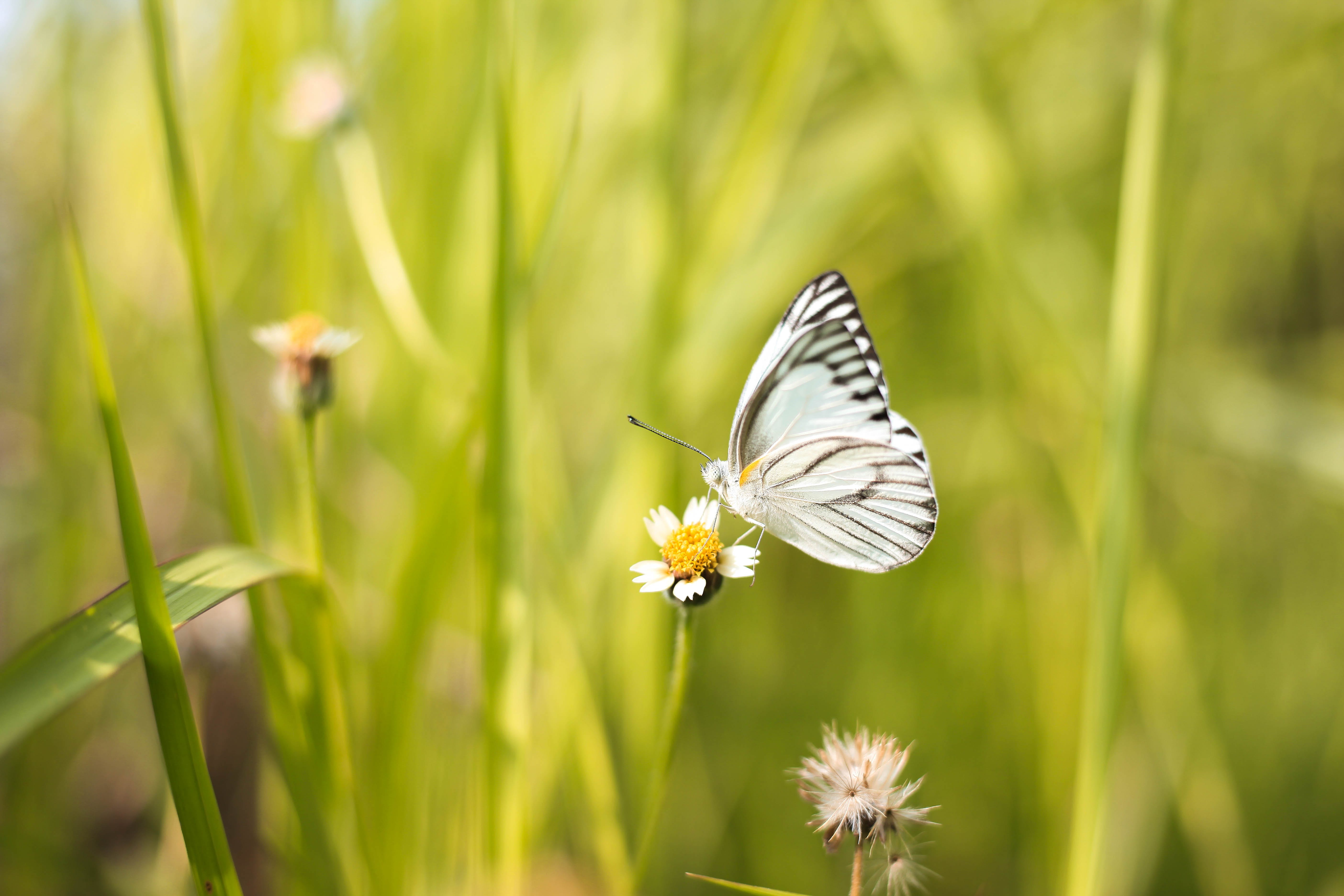 White and Black Butterfly on White Flower
