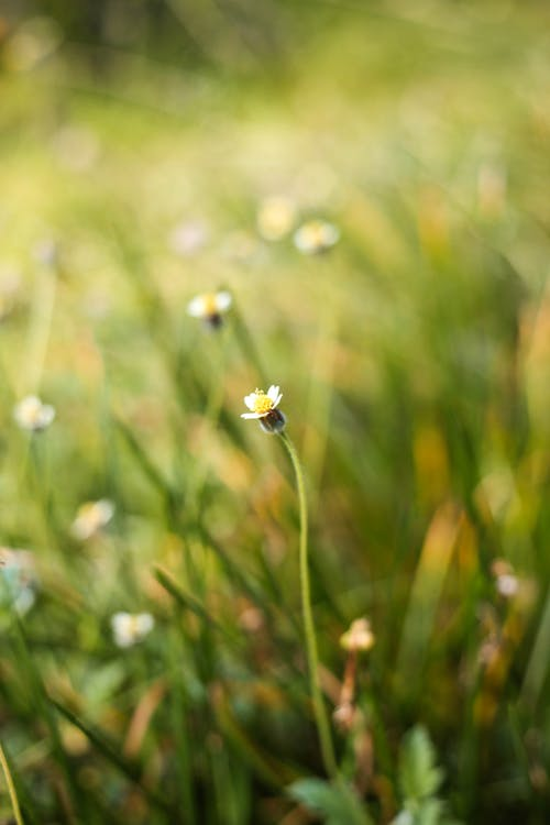 Fotobanka sbezplatnými fotkami na tému kvetinové pole, letné kvety, tráva, záhrada