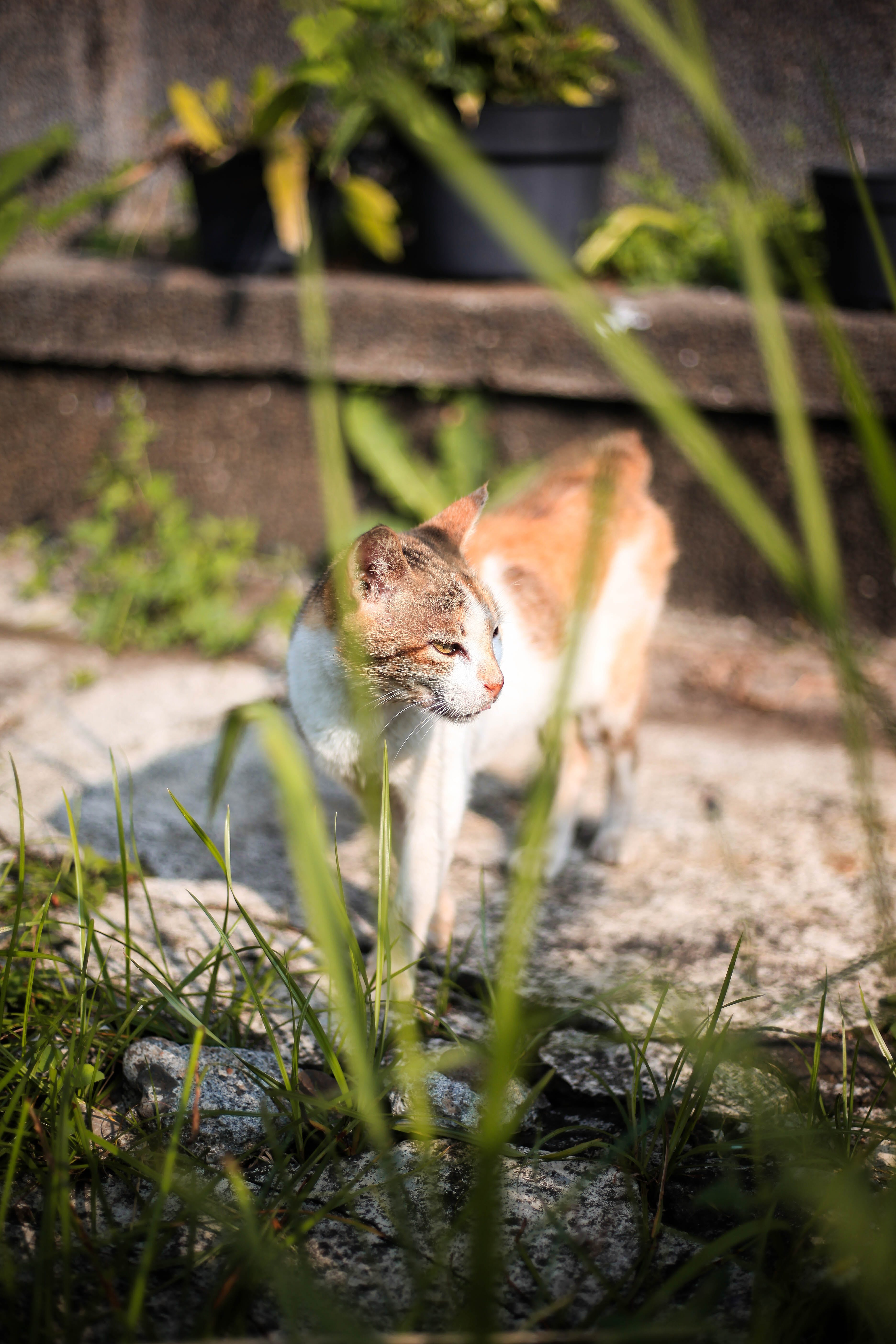 Free stock photo of cats, cute, garden, plants