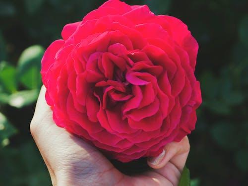 Fotos de stock gratuitas de flor, floral, flores, lila