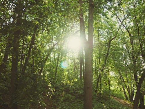Fotos de stock gratuitas de árbol, arboles, bosque, ligero