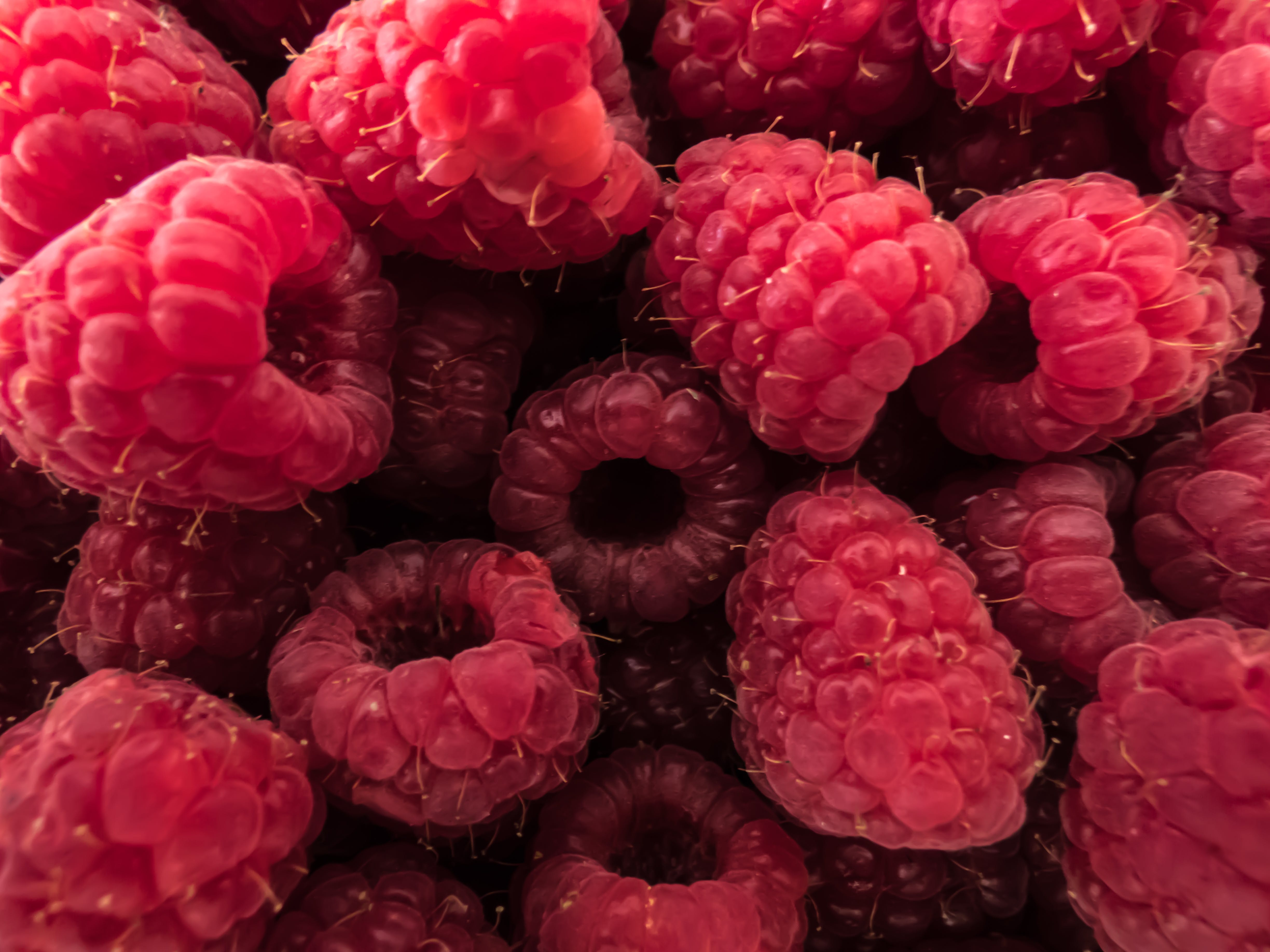 Free stock photo of fruit, fruits, raspberries, red