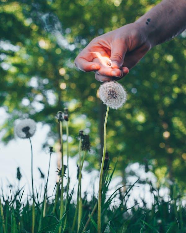 bane, blomster, brand