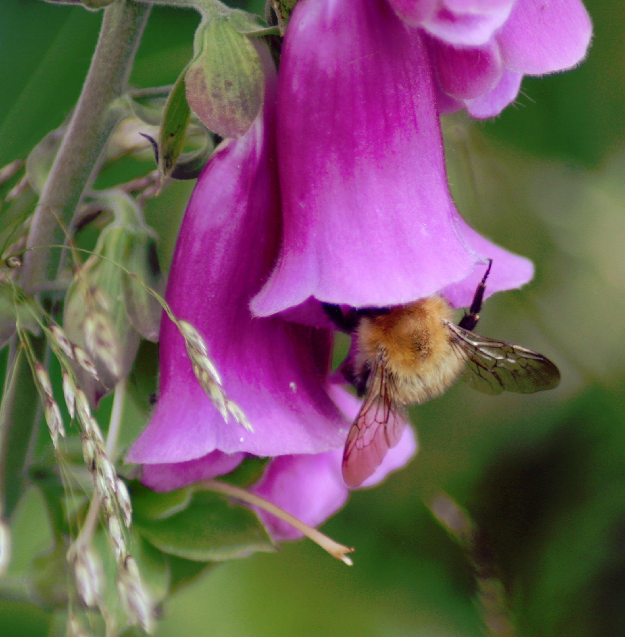 Free stock photo of bee, flowers, honey bee, nature
