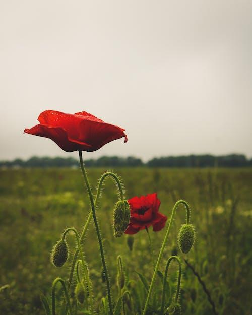Foto d'estoc gratuïta de a pagès, camps, flors, fotografia
