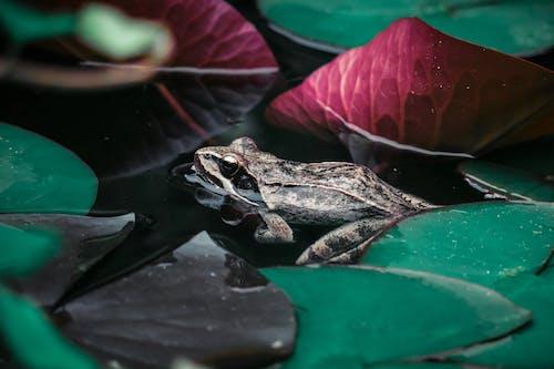 兩棲動物, 動物, 動物攝影, 天性 的 免费素材照片