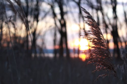 Selective Focus Photography Of Grass During Sunset