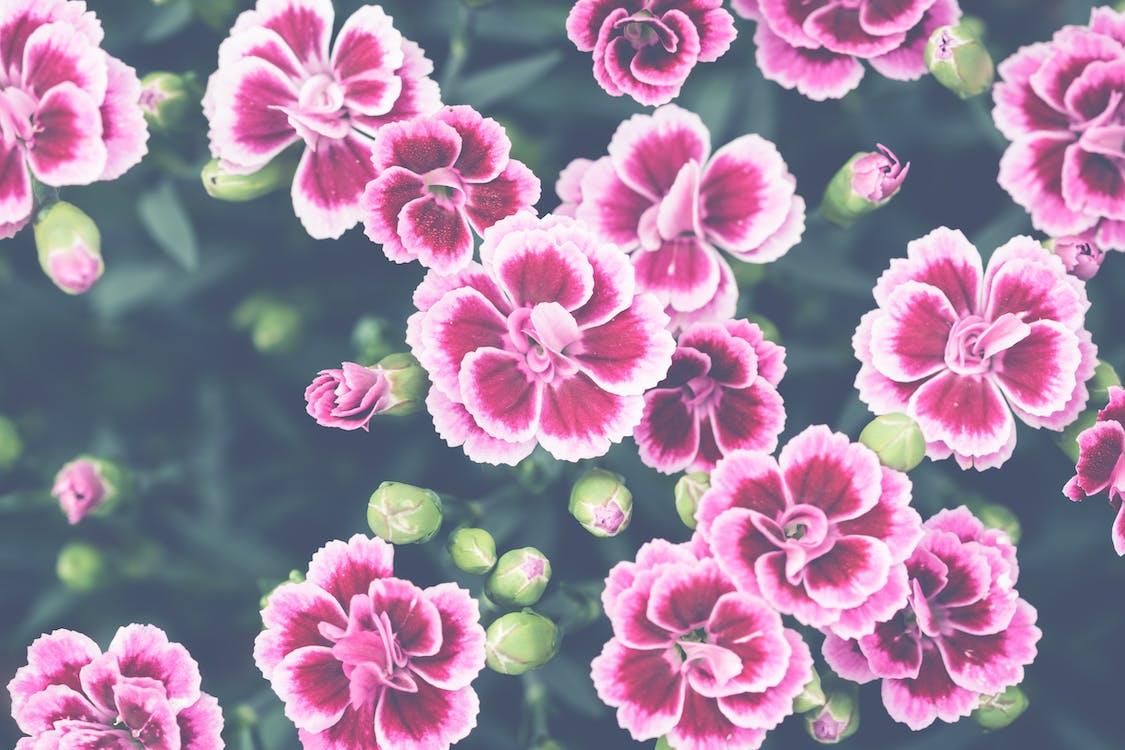 ботанический, бутоны, лепестки