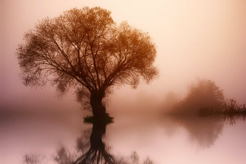 Photos gratuites de à contre-jour, arbre, aube, brouillard