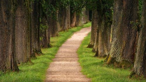 Δωρεάν στοκ φωτογραφιών με γρασίδι, δέντρα, ημέρα, κορμοί δέντρων
