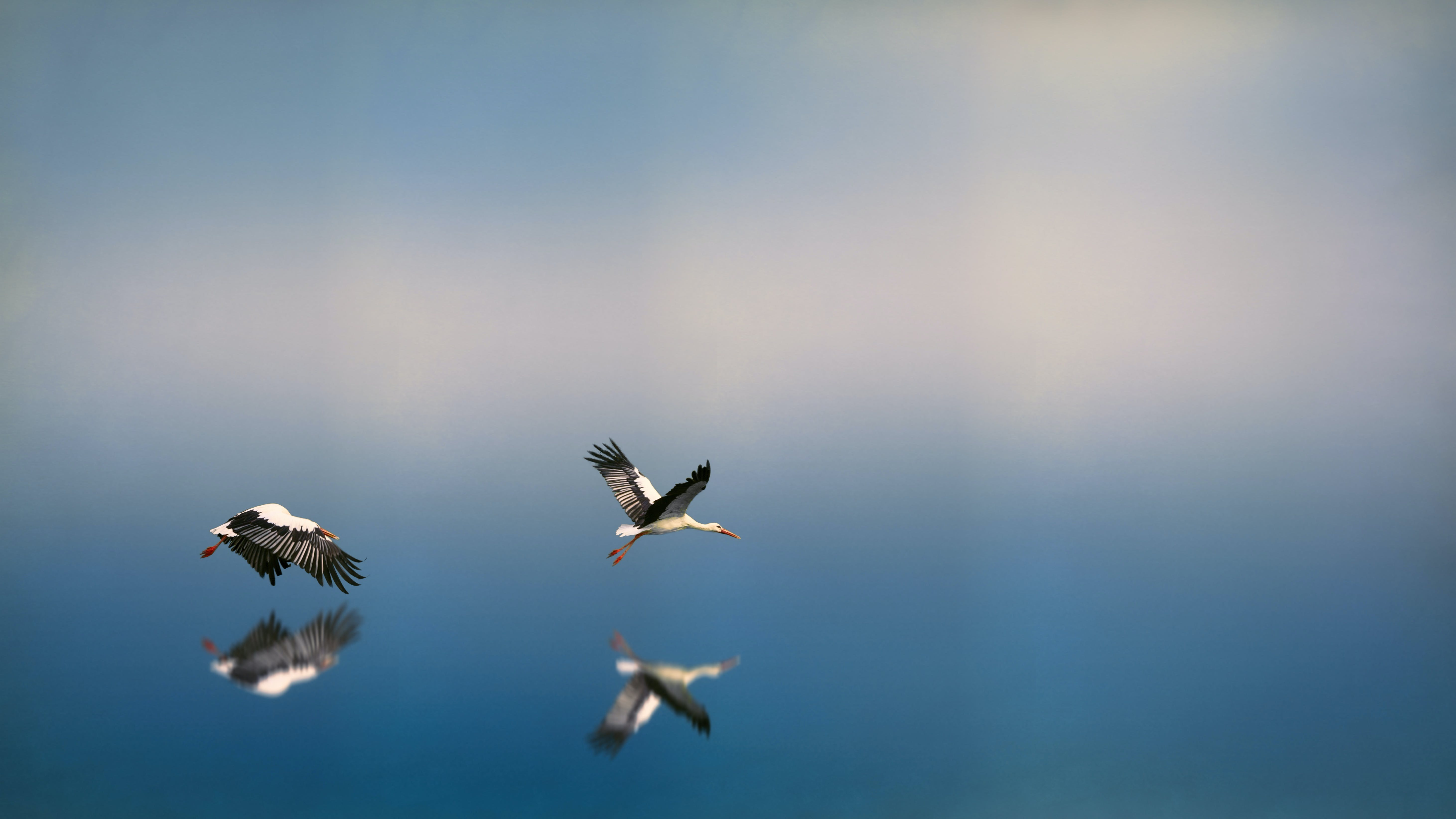 Seagulls Flying Above Body Of Water