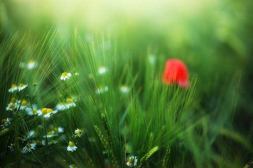 Foto stok gratis berbayang, bunga-bunga, flora, hijau