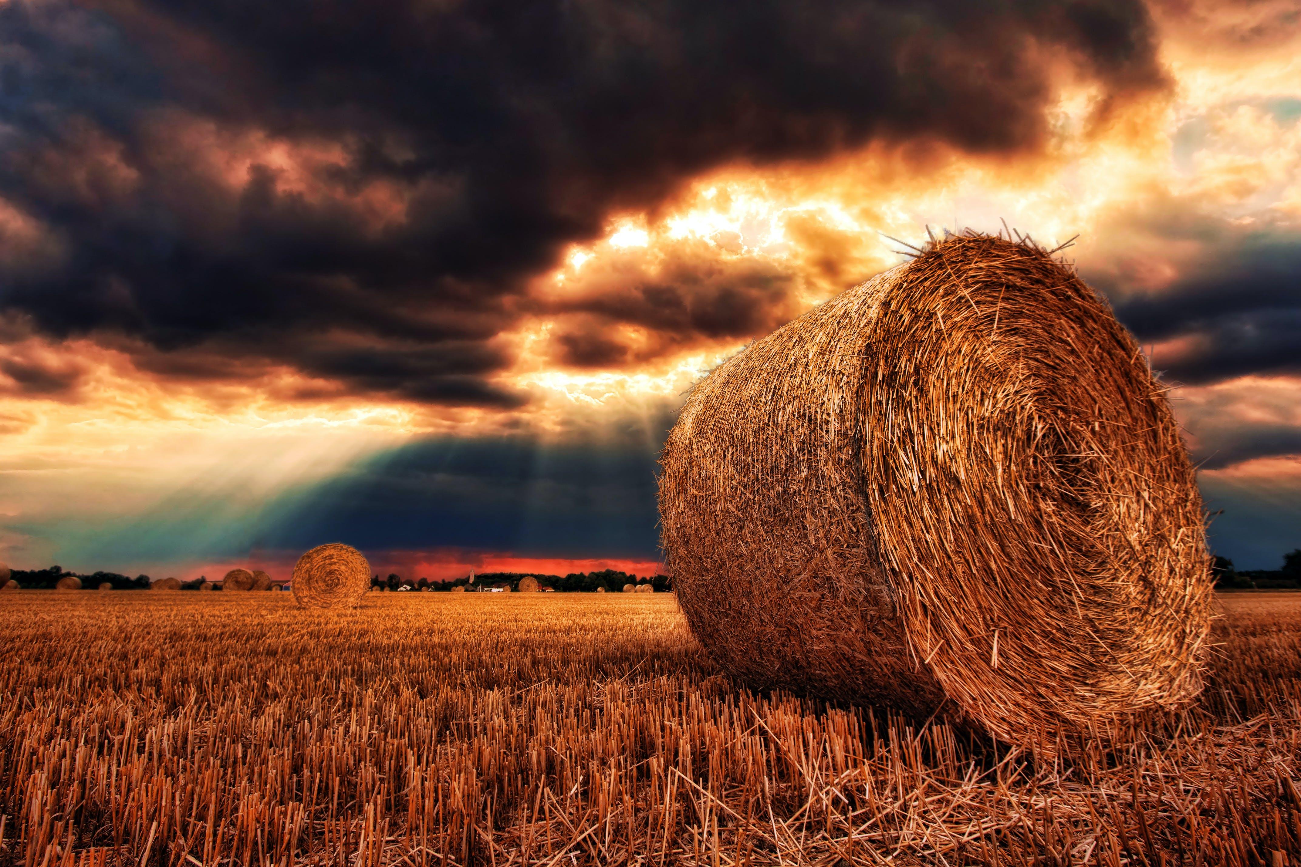 คลังภาพถ่ายฟรี ของ ตะวันลับฟ้า, ทุ่งเลี้ยงสัตว์, นา, พืชผล