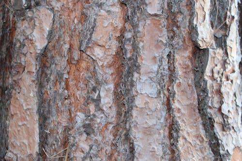 Fotobanka sbezplatnými fotkami na tému holý strom, kôra stromu