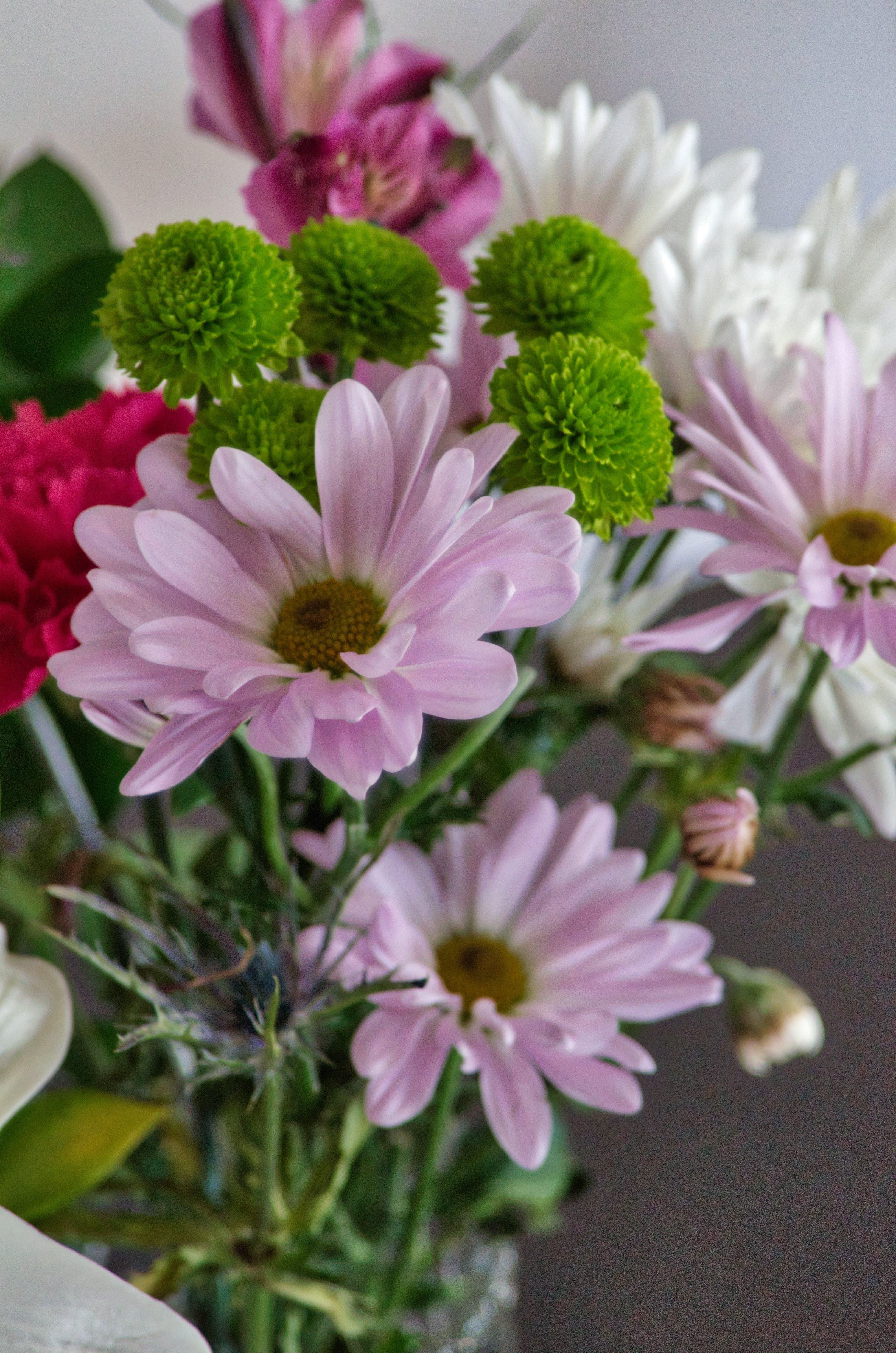 Free stock photo of garden wonders