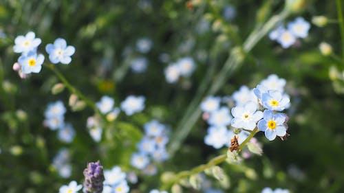 吊鐘花, 夏天, 季節, 微妙 的 免費圖庫相片