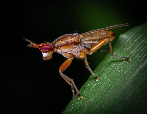 令人不寒而慄的, 宏觀, 小, 昆蟲 的 免费素材照片
