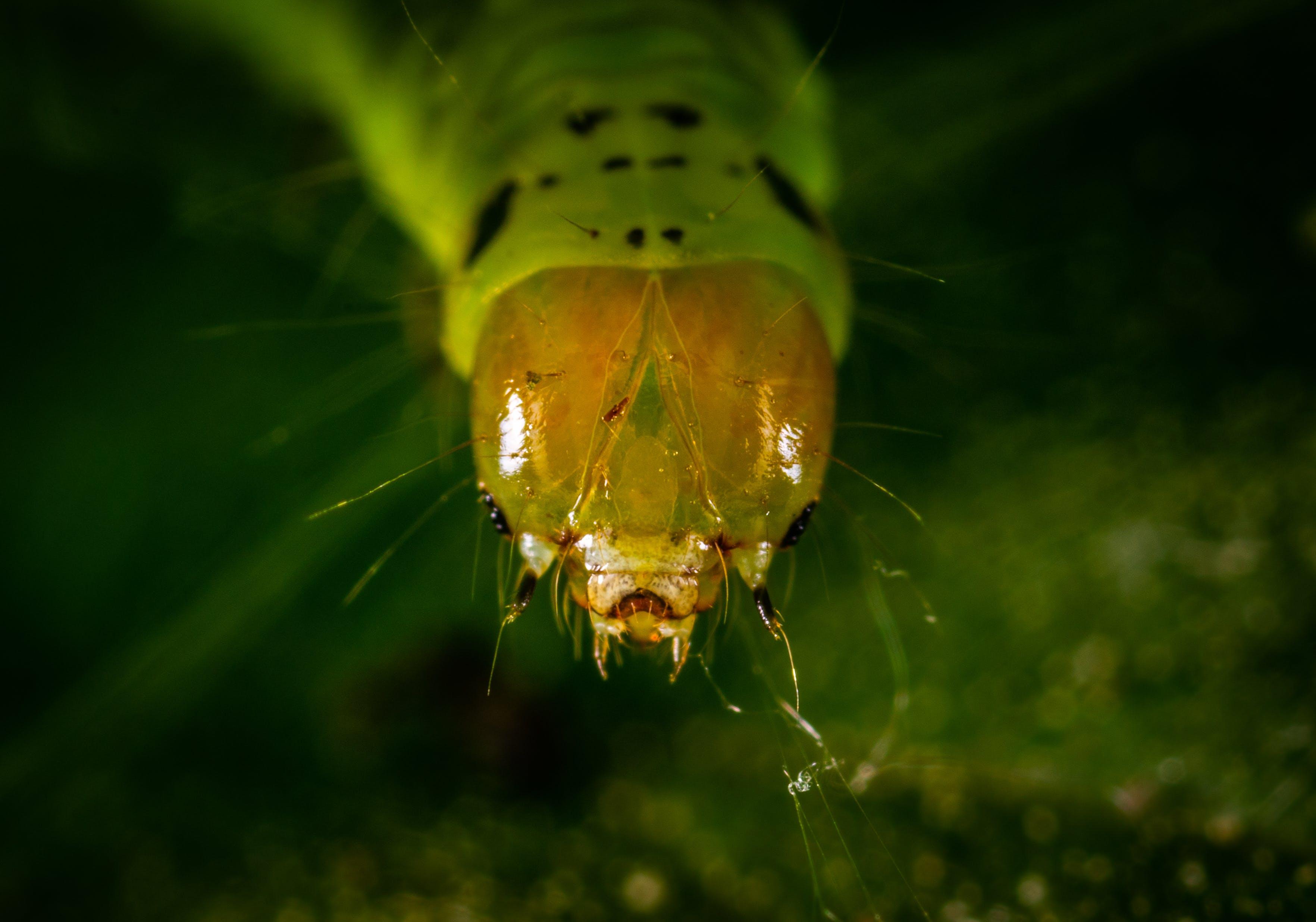 Caterpillar Close-up Photography