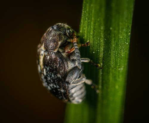 Gratis lagerfoto af Bille, close-up, insekt, lille