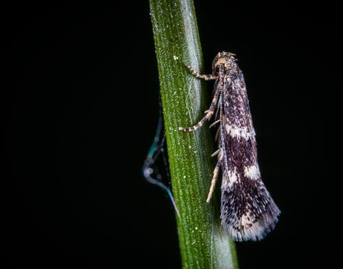 Macro Photo of White and Black Tree Hopper on Green Stem