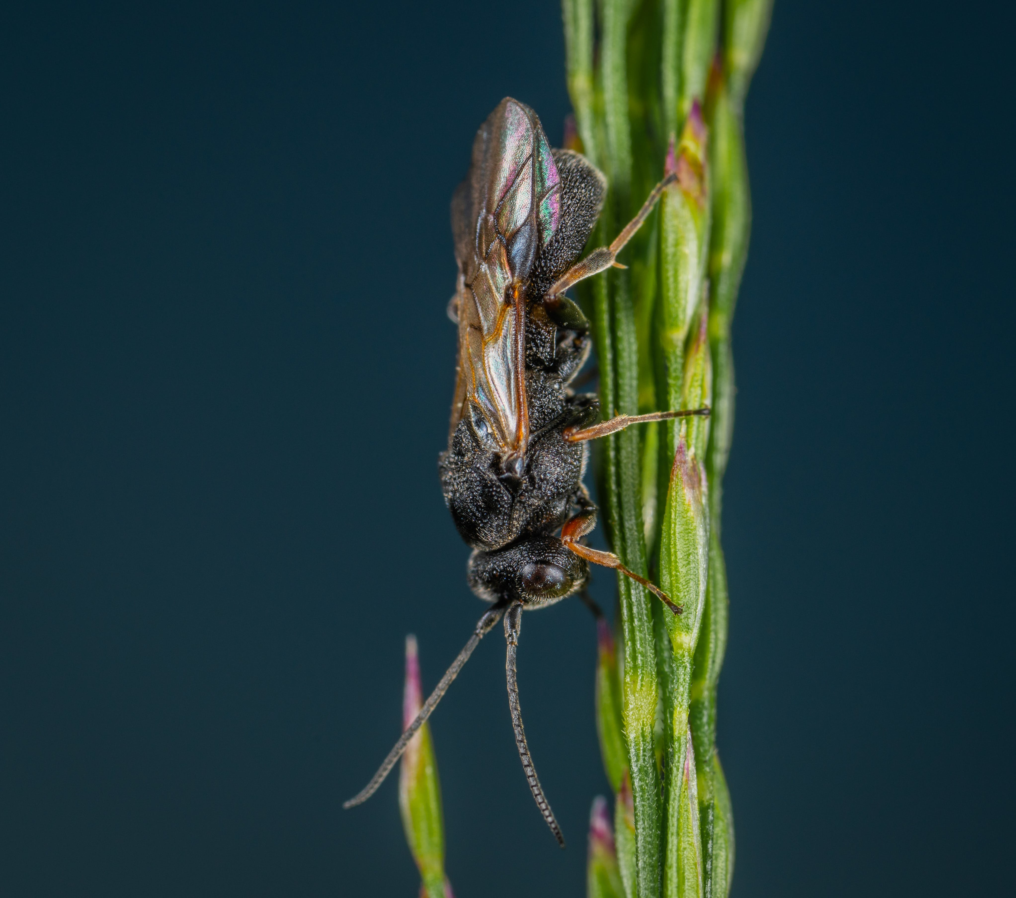 Insect On Green Plant