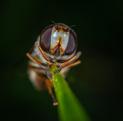 Fly On Leaf In Macro Photography