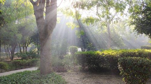 Free stock photo of Sun Rays