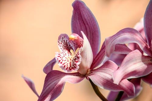 Imagine de stoc gratuită din floare, floră, înflorire, orhidee