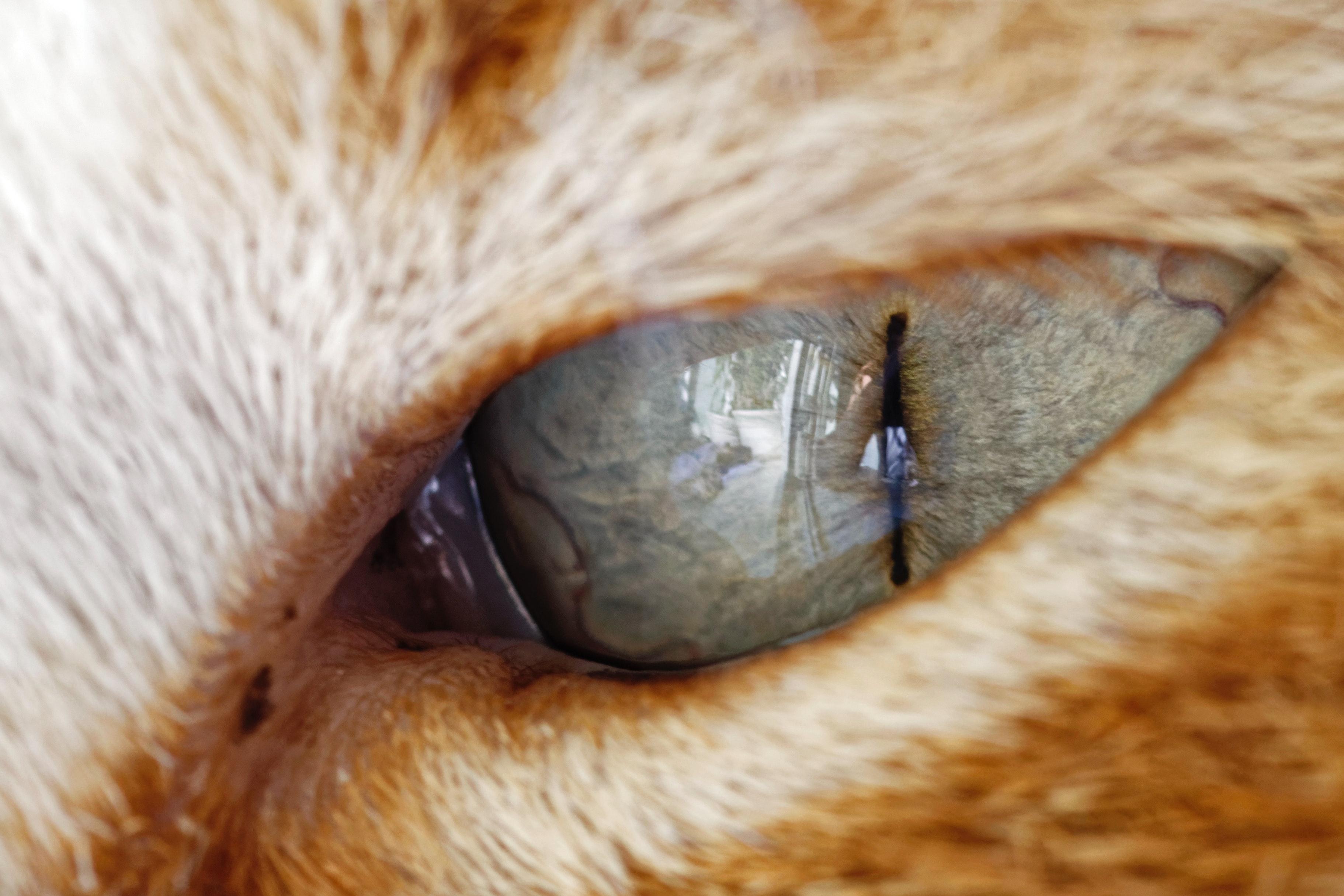 オレンジ色の猫 ママル 動物の無料の写真素材