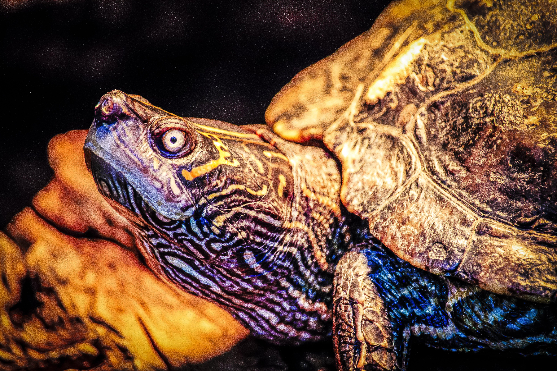 Δωρεάν στοκ φωτογραφιών με άγρια φύση, άγριο ζώο, άγριος, αμφίβιος