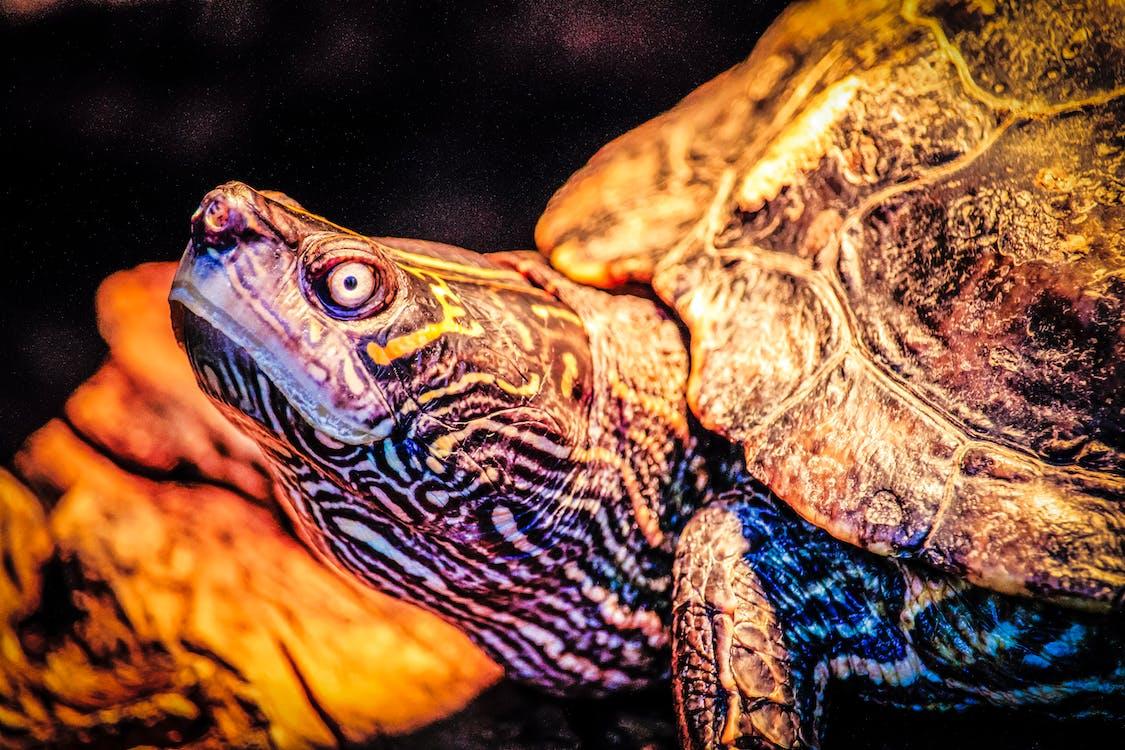 amphibien, animal, animal sauvage